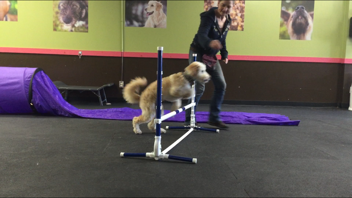 how to leave agility training