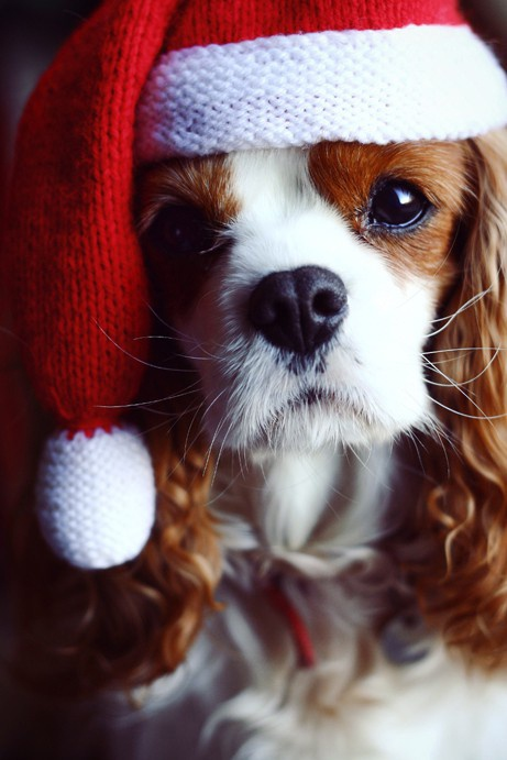 Keep your dogs safe during the howlidays