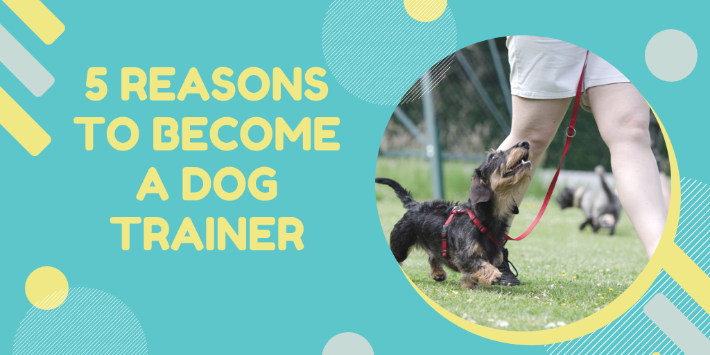 Why you should become a dog trainer